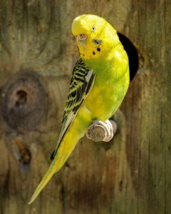 Waterdichte papegaai